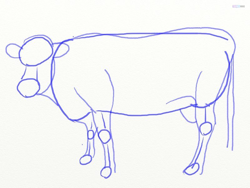 How To Draw A Cow Easy Tutorial Toons Mag